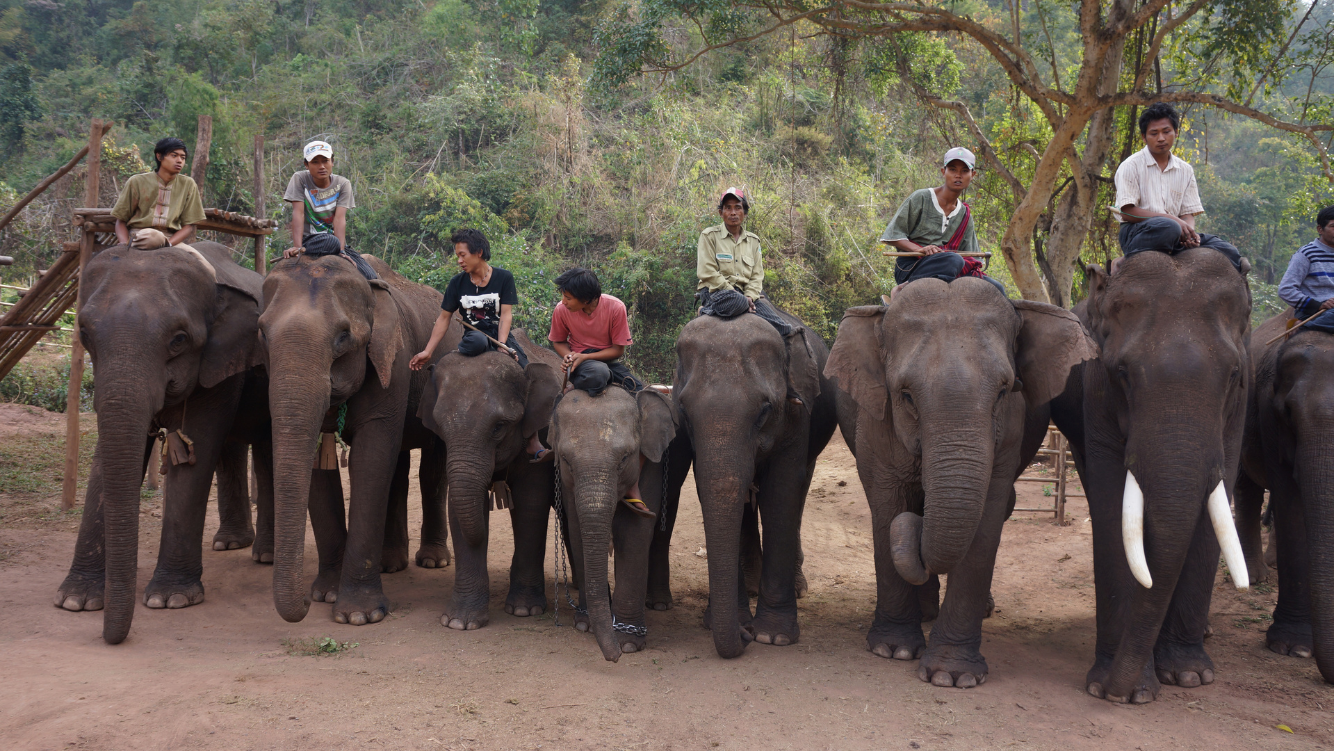 Elefantencamp im Hochland, Myanmar