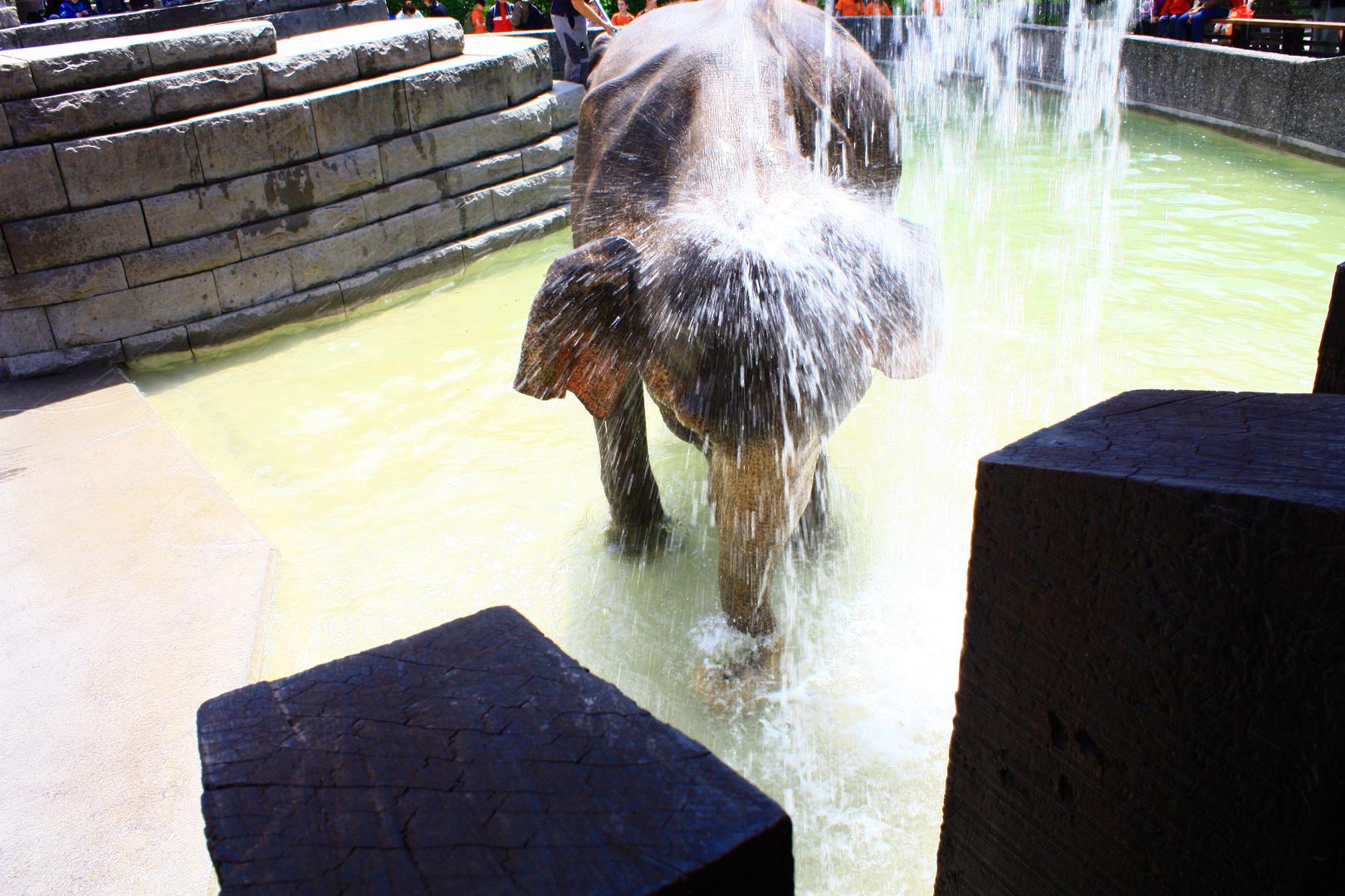 Elefantendame beim Duschen