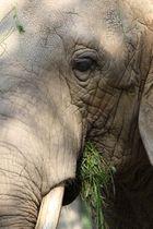 Elefantendame, ohne Oil of Olas könnte man so aussehen