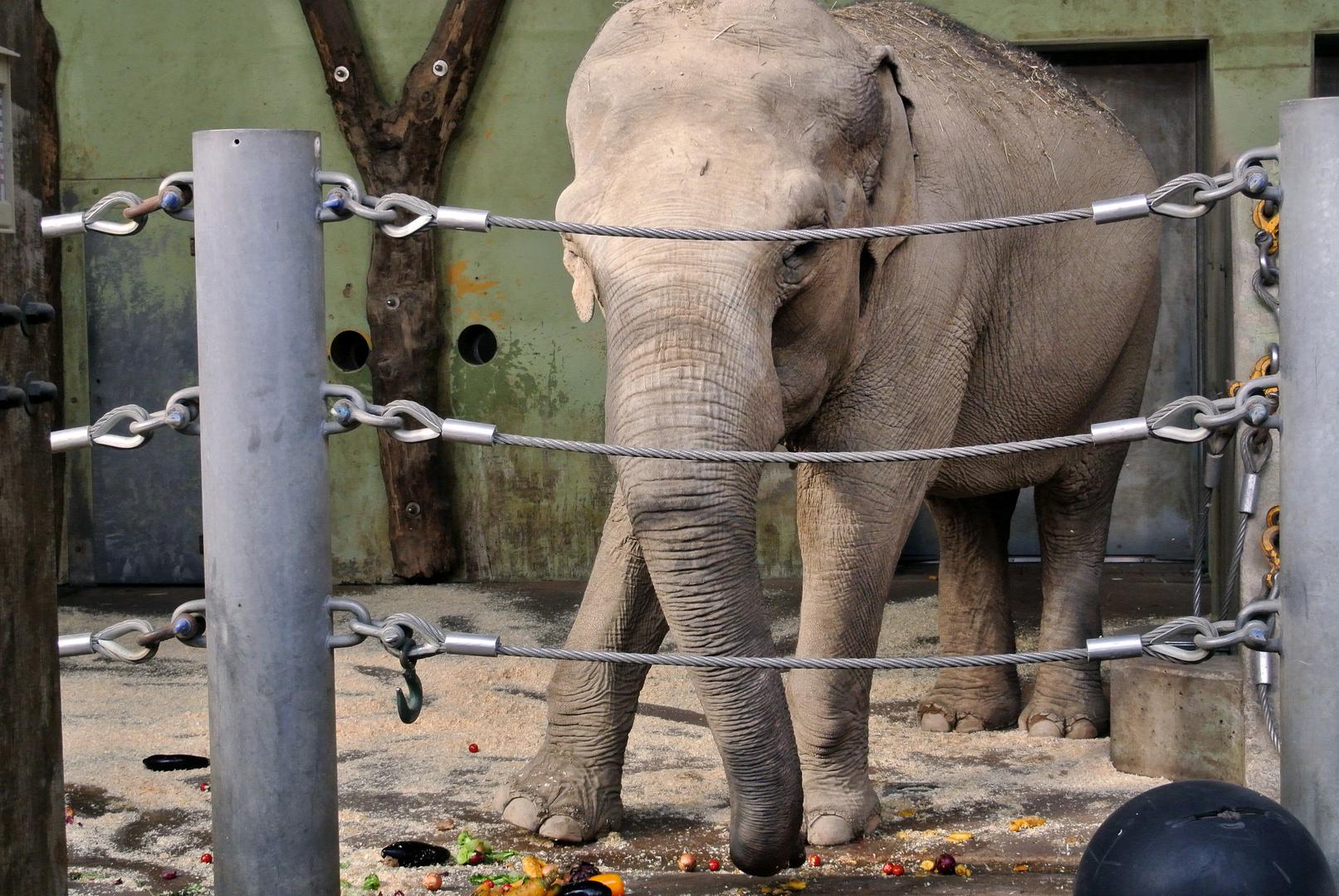 Elefantendinner