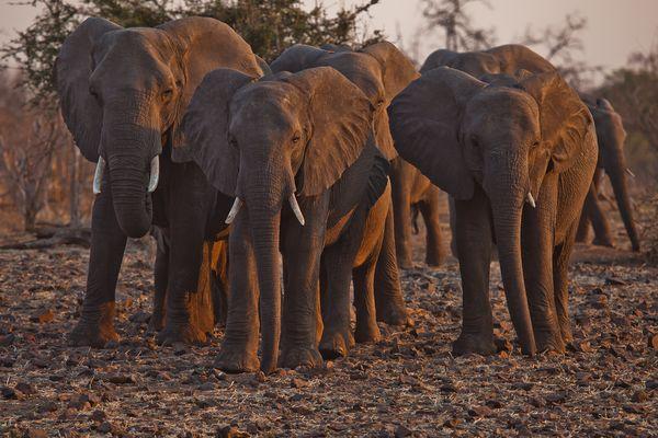 Elefantenfamilie..