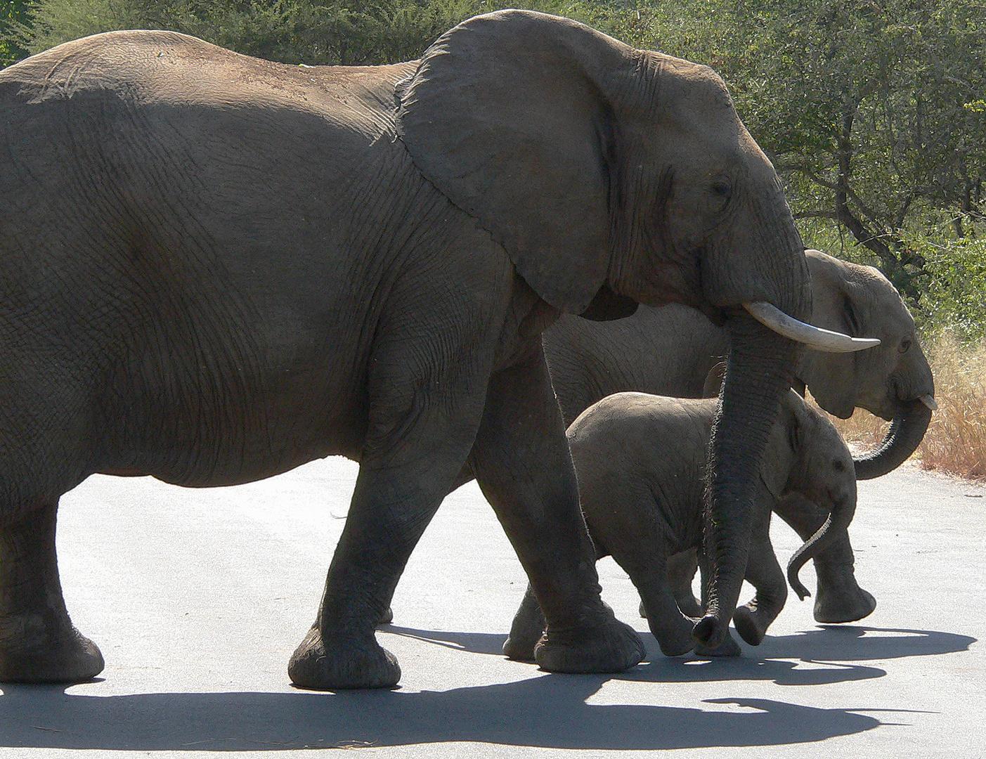 elefantenfamily