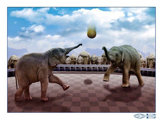 Elefantenfußball