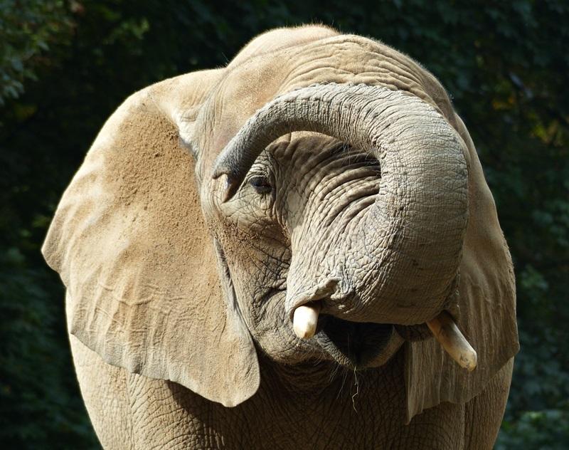 Elefantengruß
