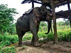 Elefantenhaltestelle