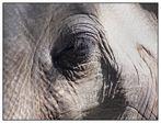 Elefantenhaut
