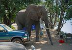 Elefanteninspektion