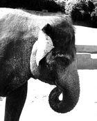 Elefantenleben