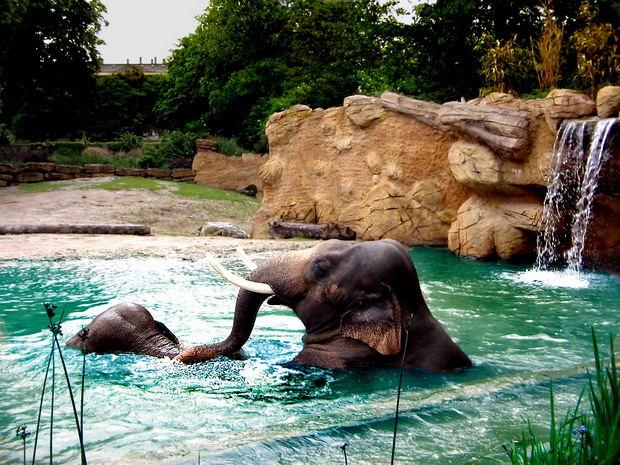 Elefantenliebe