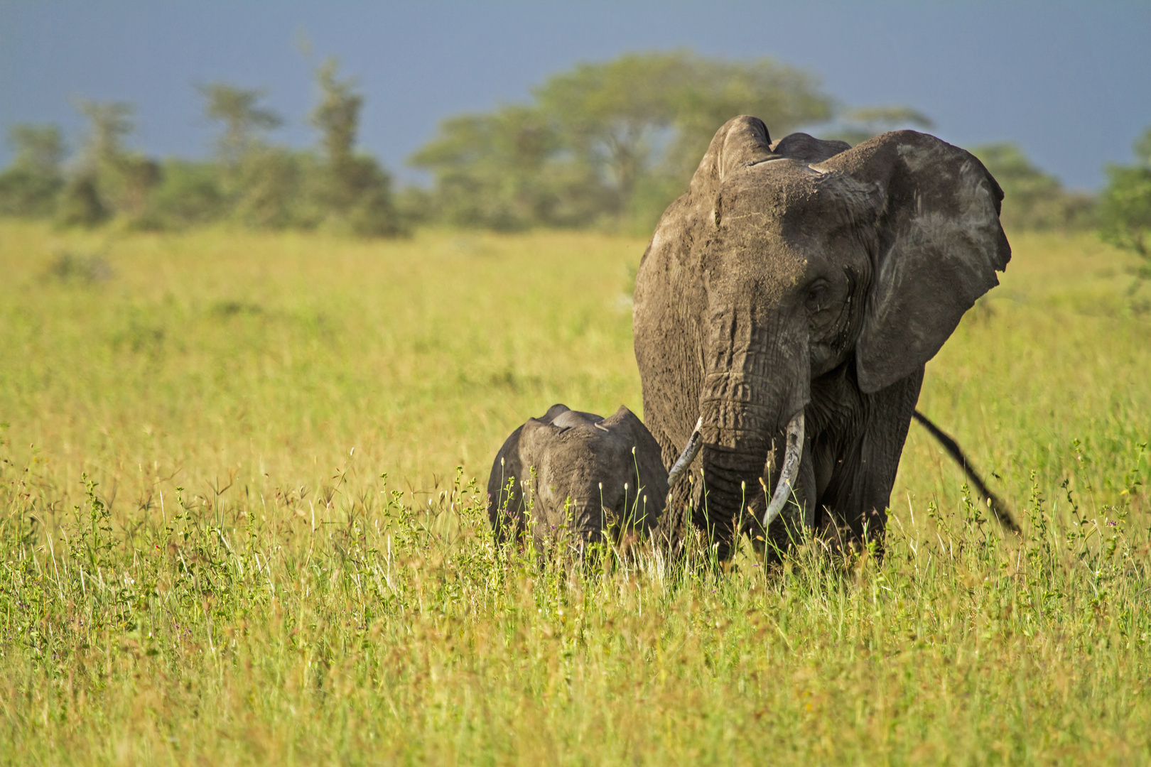 Elefantenmam mit Baby