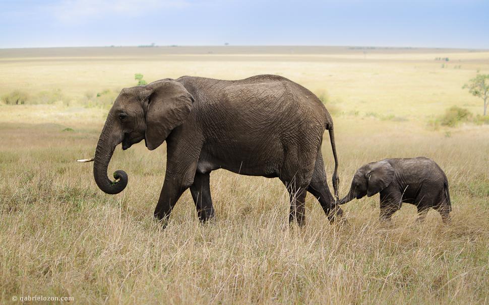 Elefantenmutter mit Baby