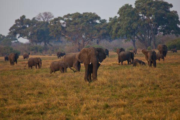 Elefantenparadies