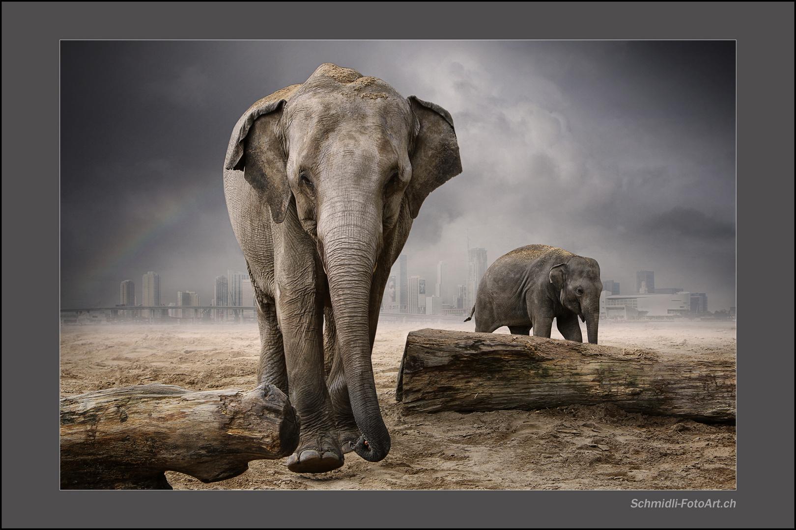 *Elefantenpark*