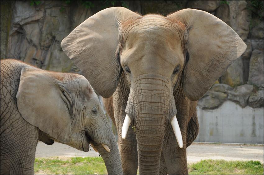 Elefantenplausch