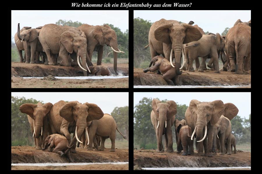 Elefantenrettung