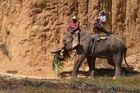 Elefantenritt bei Klong Munag, Krabi, Februar 2014