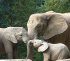 Elefantenrunde.......
