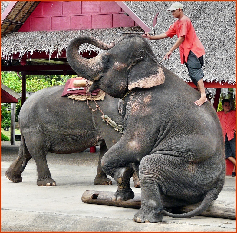 Elefantenschule in Thailand