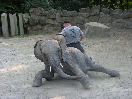 Elefantenspielstunde im Zoo Osnabrück