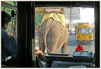 Elefantentransport