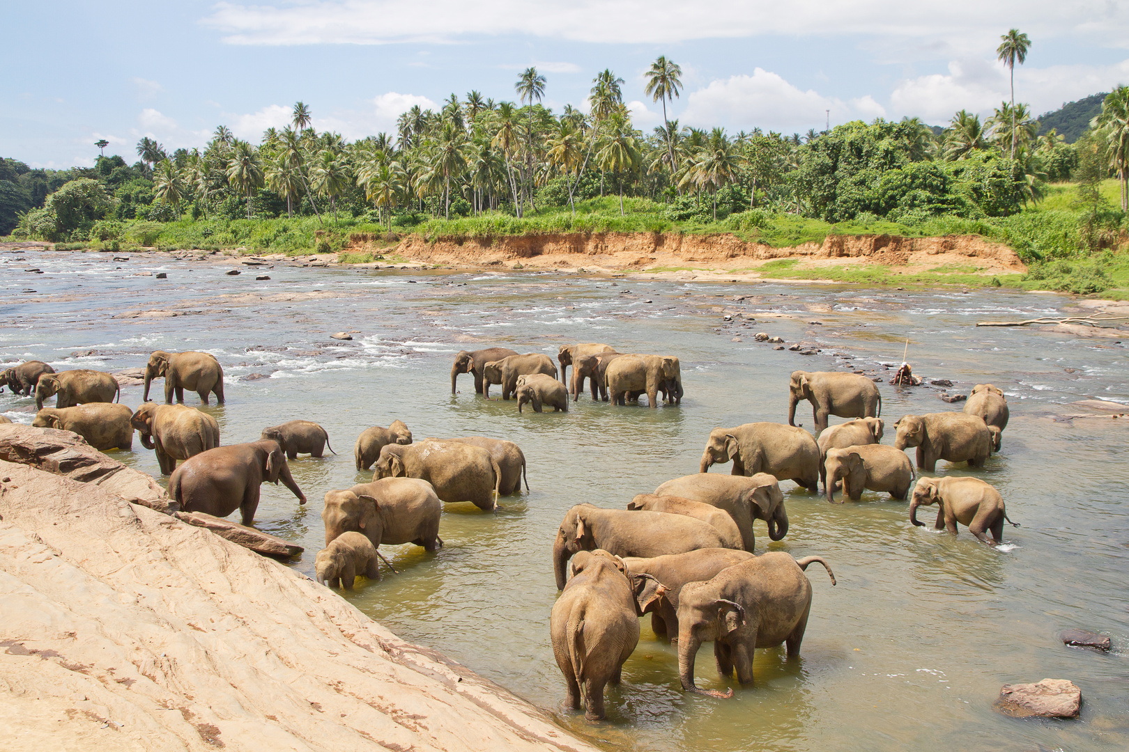 Elefantenwaisenhaus - Sri Lanka