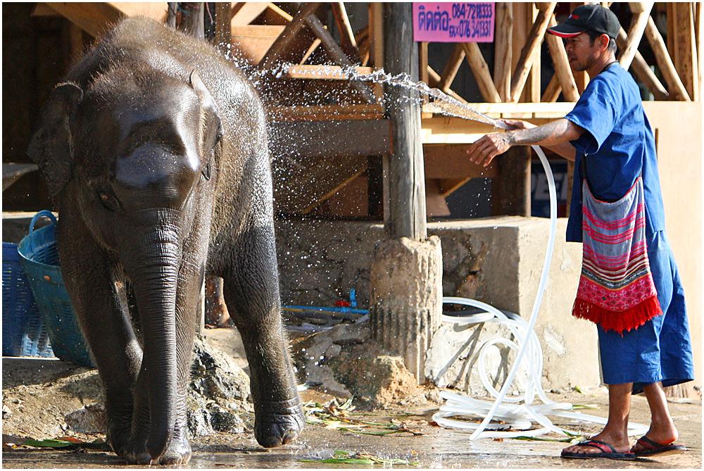 Elefantenwaschanlage