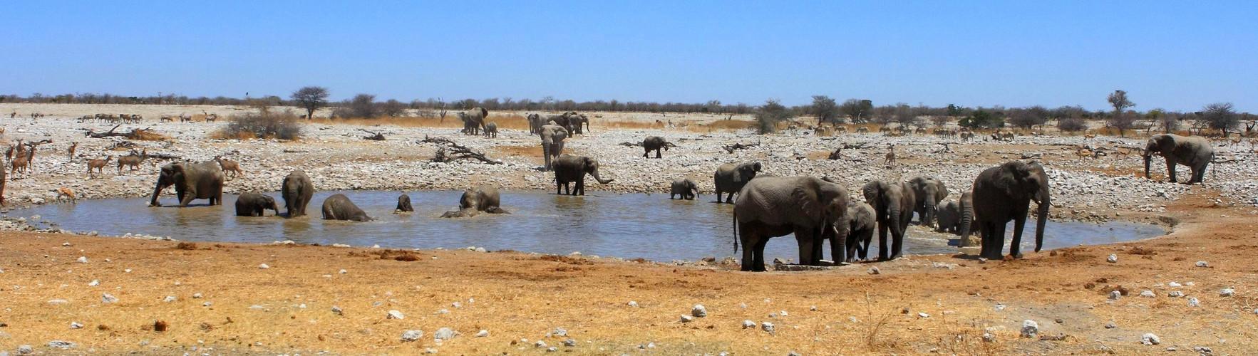 Elefantenzeit am Wasserloch...
