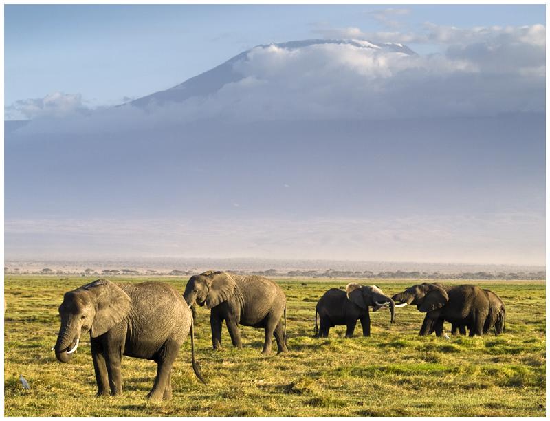 Elefantes y el Kilimanjaro desde Amboseli (Kenya)