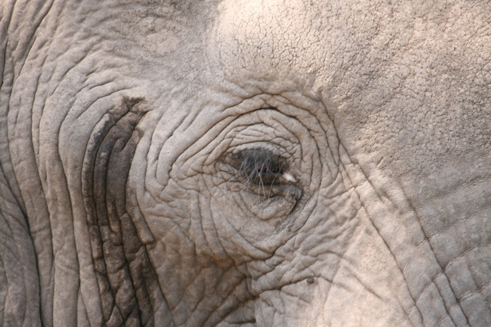 Elefanti (1)