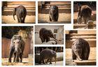 Elefantös