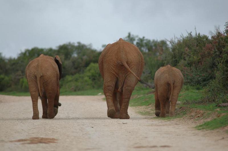 Elefants Street Parade II
