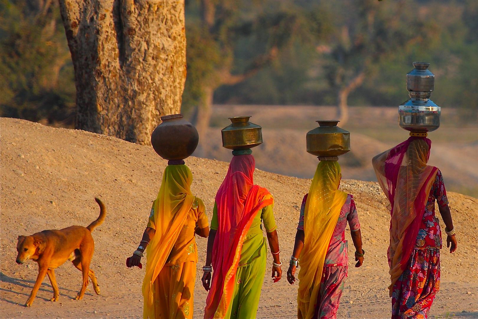 Elégance des villageoises du Rajasthan.