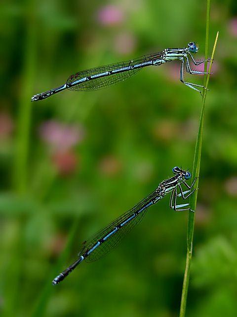 elegance of nature