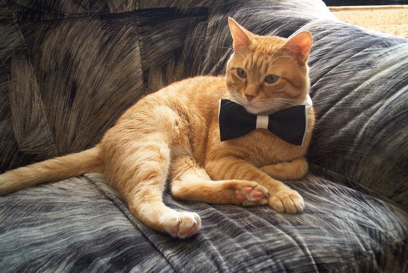 Elegant Mr Tom
