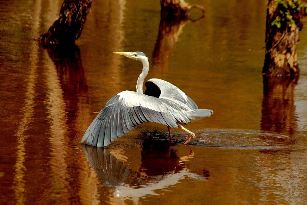 elegante Landung..