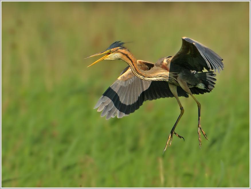 Elegante Landung