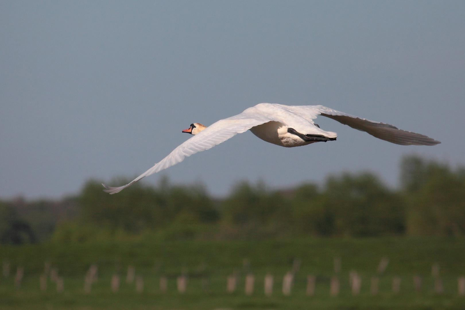 Eleganter Flieger #2