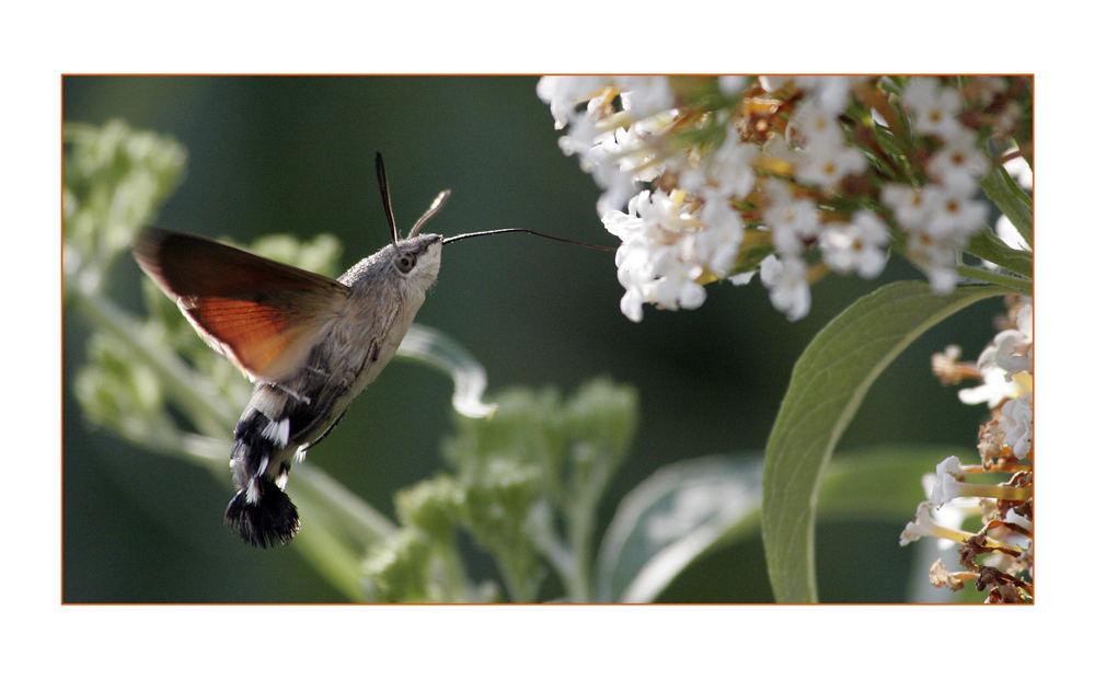 Eleganter Flug