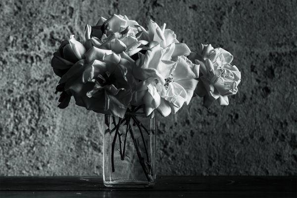 eleganza in bianco e nero