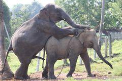 elephant business Ü1377K