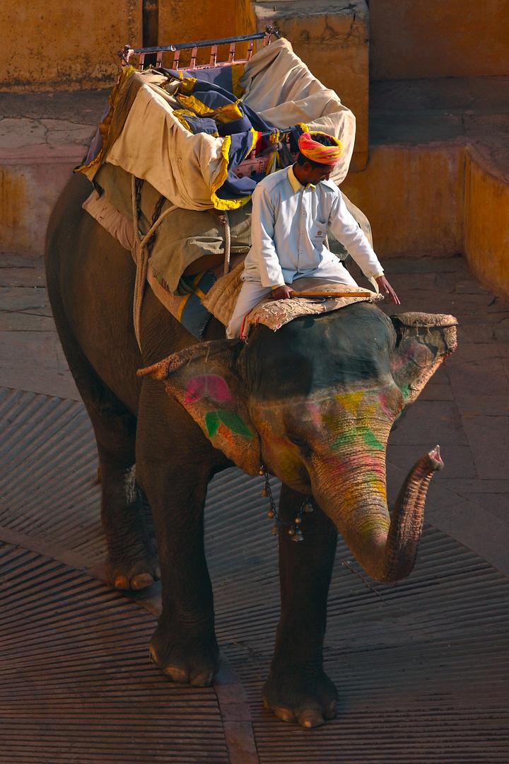Eléphant du fort d'Amber, Jaipur, Rajasthan