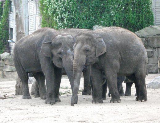 elephant formation