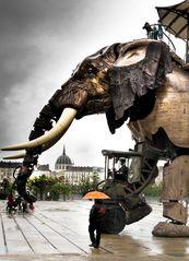 Elephant im Regen