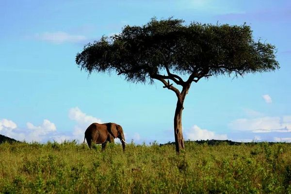 Elephant in nature