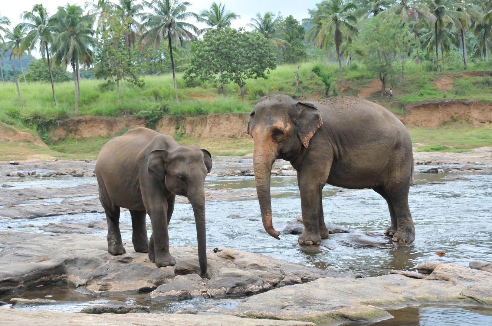 Elephant Park Srilanka