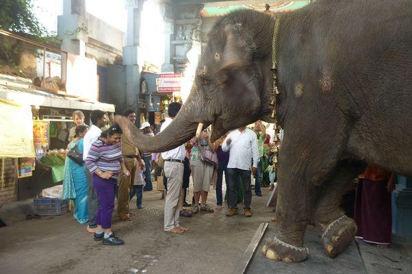 Eléphant qui bénit