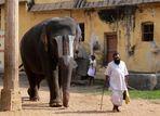 Elephant sacré ... / Holy elephant ...