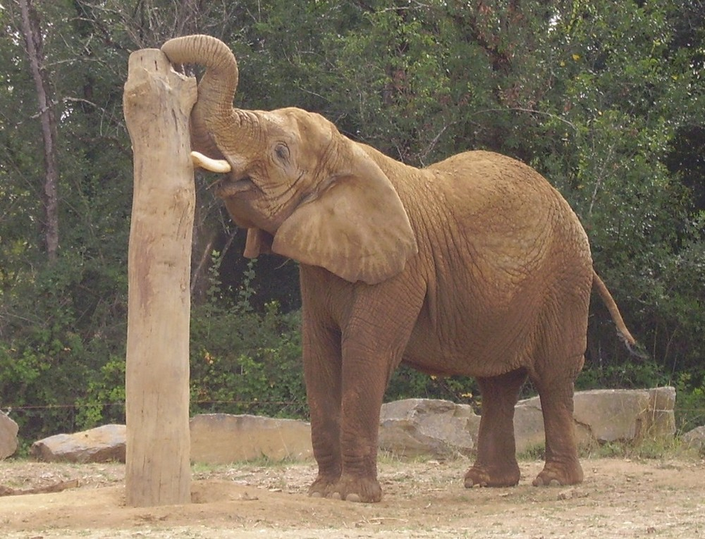 éléphant safari