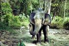 elephant<3