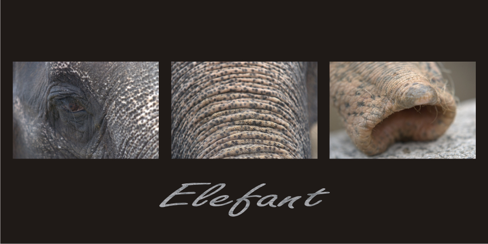 ELEPHANTASTISCH....